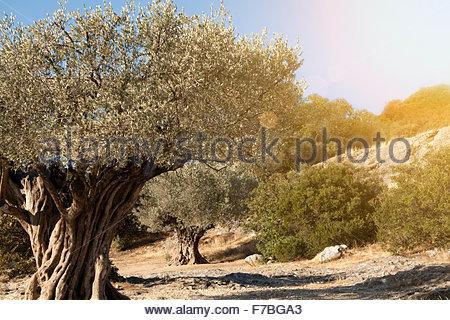 Olives very vintage speak