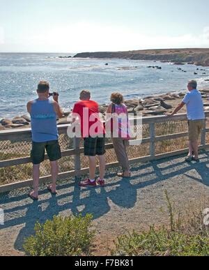 People viewing elephant seals basking on Point Piedras Blancas beach near San Simeon on the central California coast. - Stock Photo