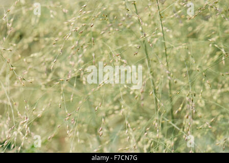 texture of the leaves and stems of grasses - Stock Photo