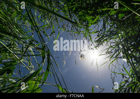 grass from below with sun flares in the middle - Stock Photo