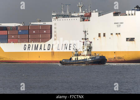 The tug Svitzer Cecilia is dwarfed by the large container cargo ship Grande Congo as she steams upriver on the River - Stock Photo