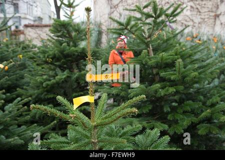 christmas trees on sale dresden germany 30 november 2015 christmas tree sales have - Christmas Tree On Sale