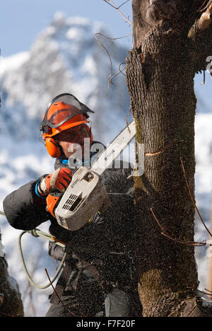 Tree surgeon with small chainsaw cutting through tree trunk with snow covered mountain in the background - Stock Photo