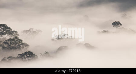 Mist rising at dawn over Danum Valley, Sabah, Malaysia - Stock Photo