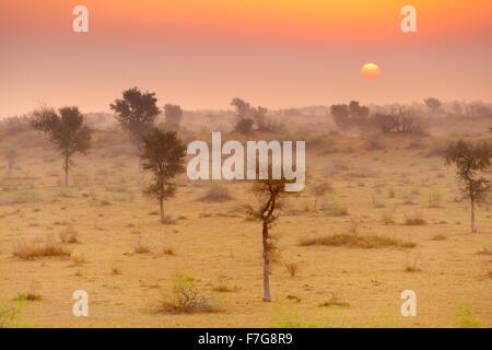 Sunrise in Thar desert near Jaisalmer, Rajasthan, India - Stock Photo