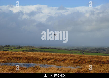 Bird flying over the moors in winter, Dartmoor National Park, Devon, England - Stock Photo
