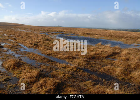 The moors in winter, Dartmoor National Park, Devon, England - Stock Photo