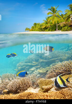 Tropical beach at Maldives Island - Stock Photo
