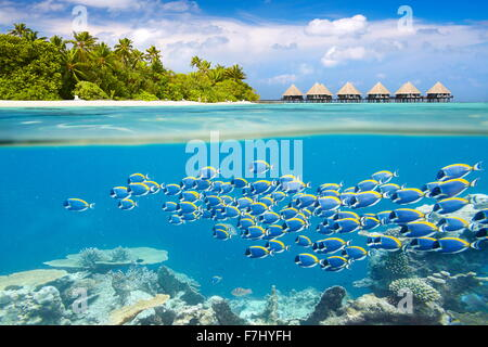 Maldives Island - underwater view with shoal of fish - Stock Photo