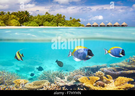 Maldives Island - underwater view with reef and fish - Stock Photo