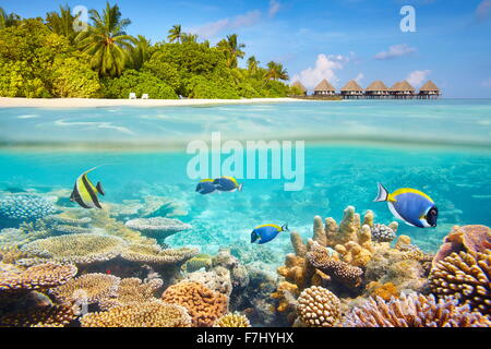 Tropical underwater view with reef and fish, Maldives Island - Stock Photo