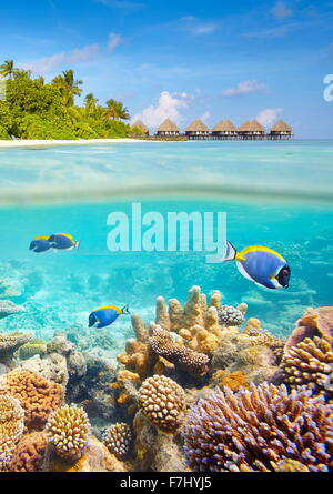 Underwater view with reef and fish, Maldives Islands - Stock Photo