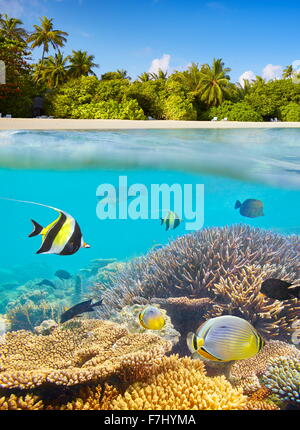 Maldives Islands - underwater view at tropical fish and reef - Stock Photo