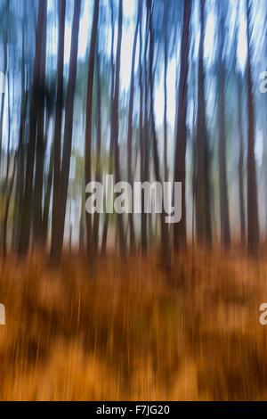 Spooky woods - Stock Photo