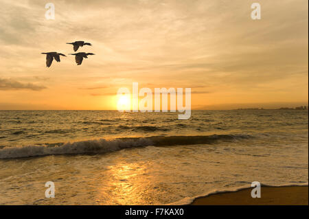 Birds silhouette is three birds flying silhouetted against a beautiful soft sunset sky with the ocean waves below. - Stock Photo