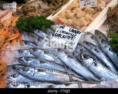 Line caught Cornish Mackerel fish on display at fishmongers stall Borough Market Southwark London UK - Stock Photo