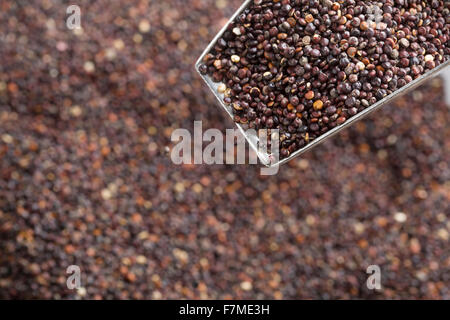 Scoop full of black quinoa seeds over out of focus heap of seeds in background - Stock Photo