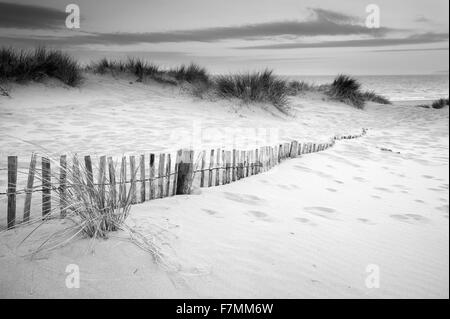 Landscape of grass in sand dunes at sunrise with wooden fences under sand dunes in black and white - Stock Photo