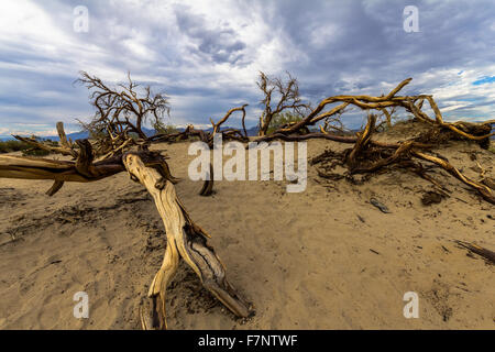 Dead wood in the desert of Death Valley, USA - Stock Photo