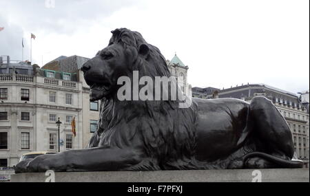 Lion statue at the base of Nelson's Column monument in Trafalgar Square in central London - Stock Photo