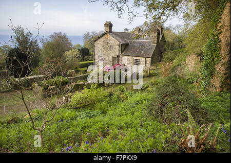 The house, seen from the garden, at Plas yn Rhiw, Gwynedd. The house is framed with bright azaleas and the new leaves - Stock Photo