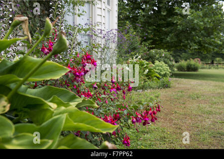 Plants flowering in the garden at Morden Hall Park, London, in July. - Stock Photo