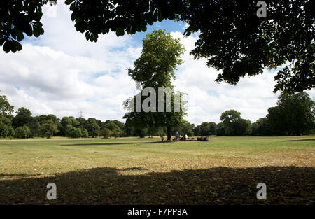 View of the parkland in July, Morden Hall Park, London. - Stock Photo