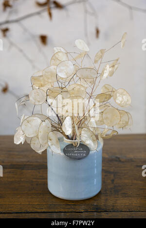 A specially commissioned pot displaying Lunaria annua ('honesty'), one of the plants used in the Christmas Garland - Stock Photo