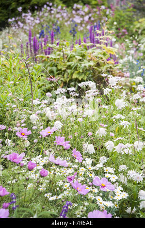 Flowers growing in the Rill Garden at Coleton Fishacre, Devon. Plants include cosmos and argyranthemum. The garden - Stock Photo