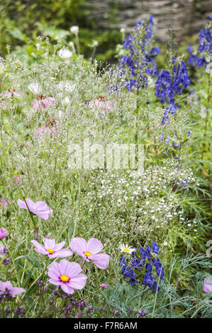 Flowers growing in the Rill Garden at Coleton Fishacre, Devon. Planting includes gypsophila paniculata with cosmos - Stock Photo
