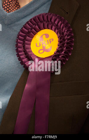 A rosette on the jacket of John Bickley of UKIP, the UK Independence Party, candidate in the forthcoming Oldham - Stock Photo