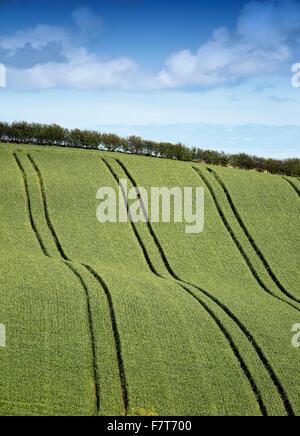Wheat fields Newtownards County Down Northern Ireland - Stock Photo