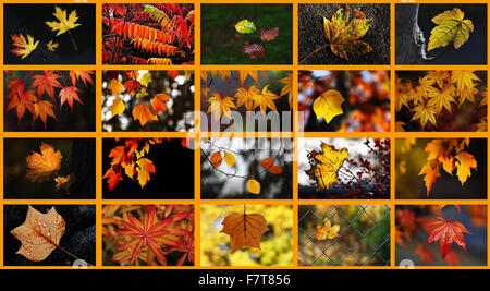 Various autumn leaves, collage - Stock Photo