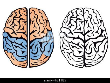 brain intelligence - Stock Photo