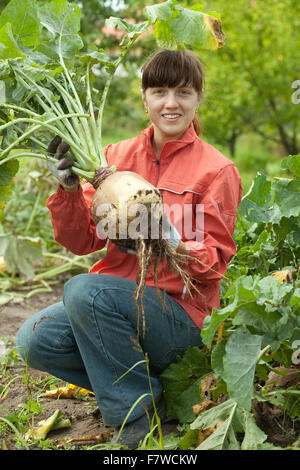 young woman  harvesting beetroot in field - Stock Photo