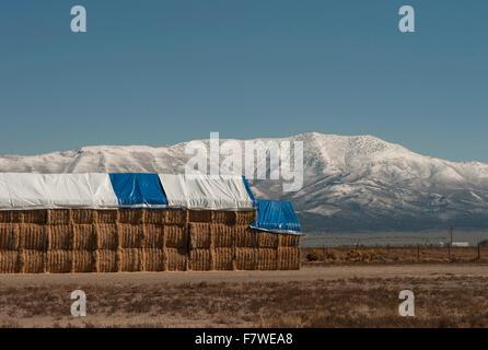 Hay bales, Nevada, United States - Stock Photo