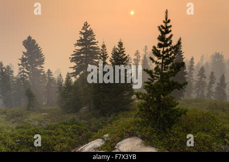 Fire near Kings Canyon, Hume California, USA - Stock Photo