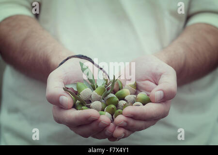 Man holding a handful of acorns - Stock Photo