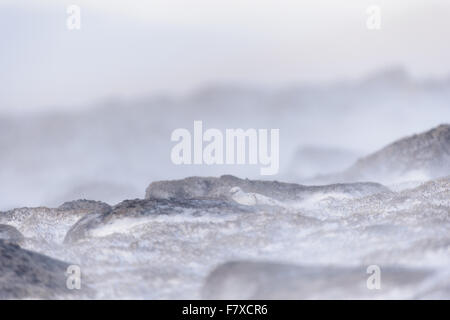 Rock Ptarmigan (Lagopus muta) adult male, non-breeding plumage, sheltering amongst rocks in snow, Cairngorms N.P., - Stock Photo