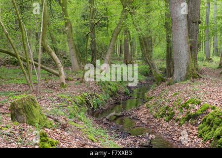 stream at herrenholz, lutten, goldenstedt, vechta district, oldenburger münsterland, lower saxony, germany - Stock Photo