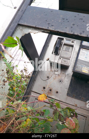 BT public phone box with smashed glass and overgrown brambles in rural Herefordshire UK - Stock Photo