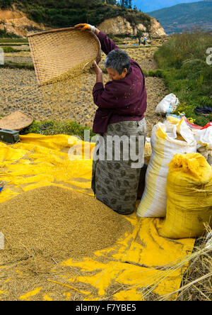 Bhutanese woman separating chaff from rice, Paro, Bhutan - Stock Photo