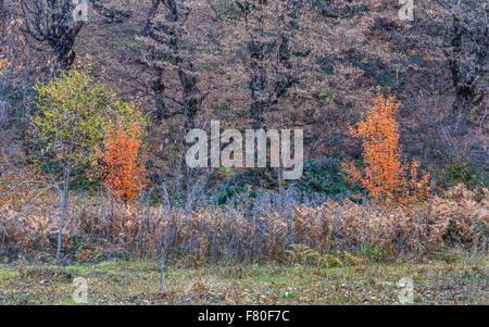 Autumn in the mountains.Vandam.Gabala.Azerbaijan - Stock Photo