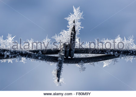 Close up of hoar frost on a barbed wire fence, Wallowa Valley, Oregon. - Stock Photo