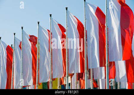 A row of polish flags - Stock Photo