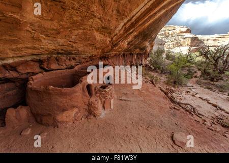 Horsecollar Ruins cliff dwellings built by Ancestral Pueblo Native Americans part of Natural Bridges National Park - Stock Photo