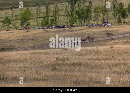 Stockriders with flock in Alay mountains on pastureland - life in Kyrgyzstan - Stock Photo