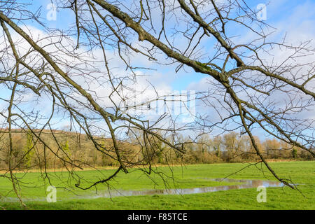 Flooded field in Winter in Arundel, West Sussex, England, UK. - Stock Photo