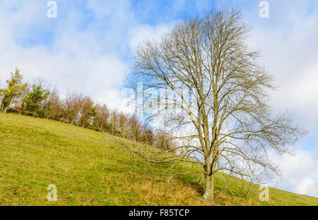 Lone leafless tree in winter on the side of a hill, against blue sky. - Stock Photo