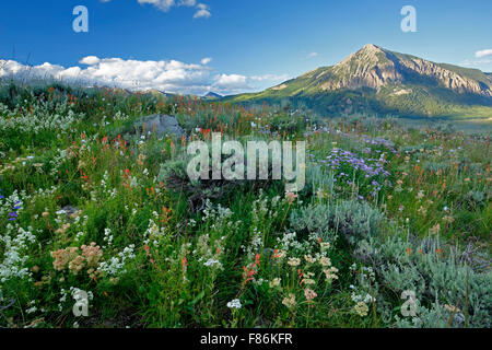 Wildflowers and Mount Crested Butte (12,162 ft.), Crested Butte, Colorado USA - Stock Photo
